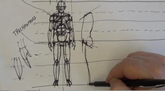 Drawing Anatomy: Male, 2 of 4
